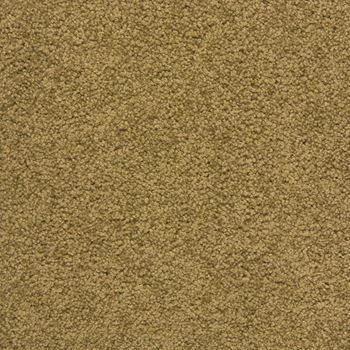 Royal Court Plush Carpet Harvest Color