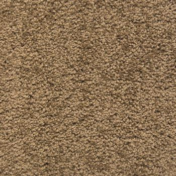Eden Plush Carpet Tree Bark Color