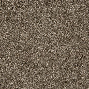 On The Scene Plush Carpet Cheer Color
