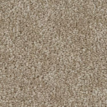 Parlor Plush Carpet Beautify Color
