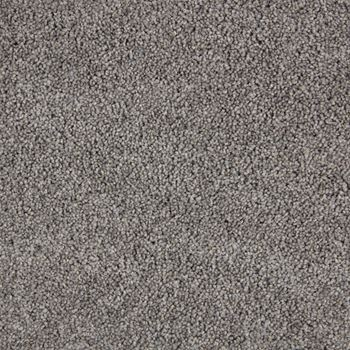 Spotlight Plush Carpet Encore Color