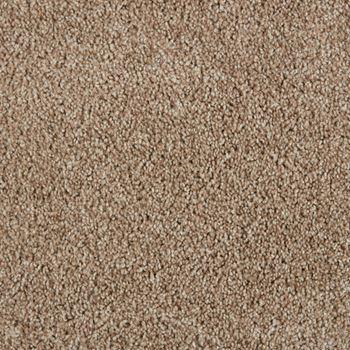 Spotlight Plush Carpet Full House Color